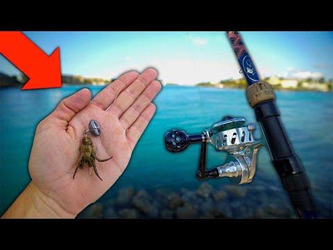 WEIRD LIVE BAIT Catches DELICIOUS Aquarium Fish!! (Catch, Clean, Cook)