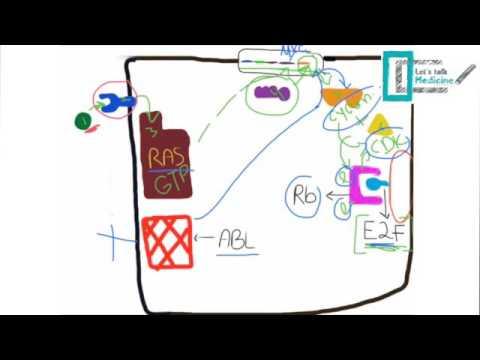 Molecular Basis of Carcinogenesis