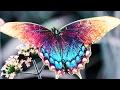 красивые бабочки раскраска