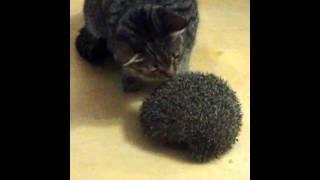 Кошка и ежик