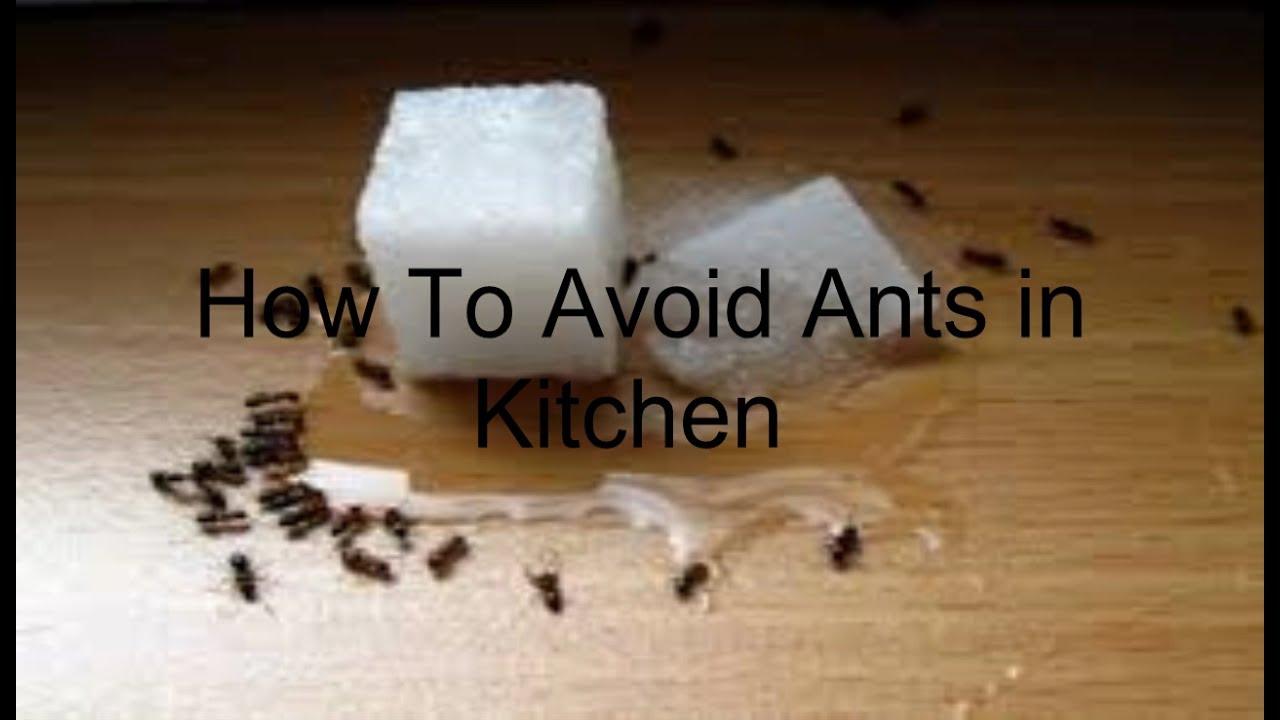ants in kitchen wow blog. Black Bedroom Furniture Sets. Home Design Ideas