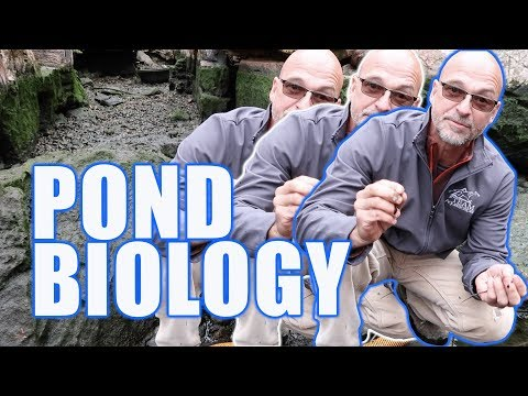 POND BIOLOGY: Mimicing A Natural Ecosystem