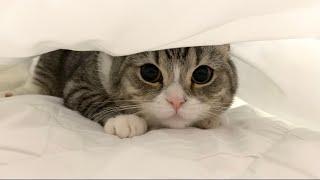 布団に隠れる飼い主を探して朝ごはんを催促してくる猫がこちらです…汗