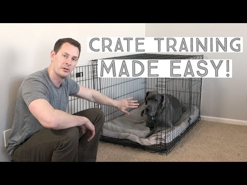 Great Dane Crate Training