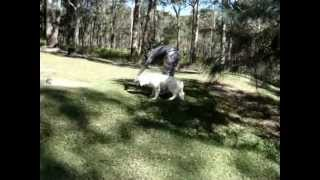 The Canine Classroom - National Dog Trainers Federation Distance Learning Students
