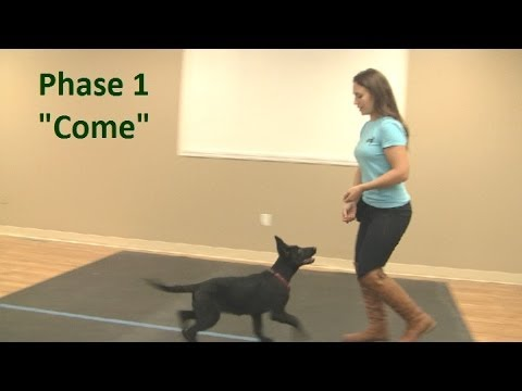 How To Teach A Puppy To Come When Called
