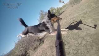 Dog Fails  Dogs Failing at Being Dogs Funny Pets