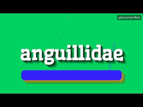 ANGUILLIDAE - HOW TO PRONOUNCE IT!?