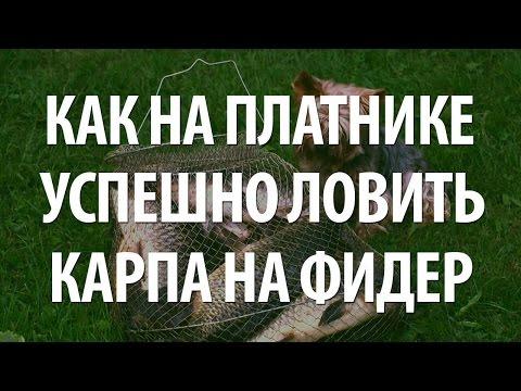 ЛОВЛЯ КАРПА НА ФИДЕР - ПЛАТНАЯ КАРПОВАЯ РЫБАЛКА