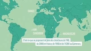 SOCA : Les mécanismes de séquestration du carbone