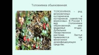 видео Экосистемы тундры