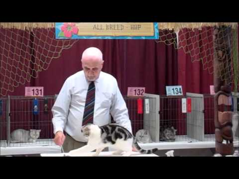 Cat Fanciers Association Cat Show