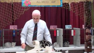 Cat Fanciers Association Cat Show
