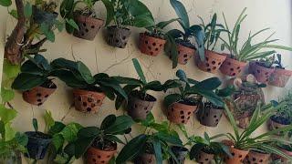 Hướng dẫn cách trồng và chăm sóc HΟA LĄN Hồ Điệp