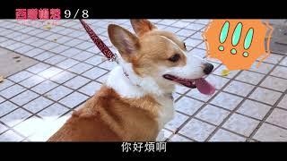 9.8【西謊極落:太爆‧太子‧太空艙】柯基泡妞篇