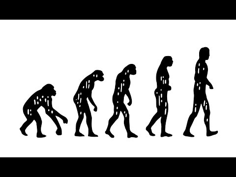 What Is Darwin's Theory Of Evolution?