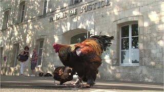フランスのリゾート地で朝から鳴く雄鶏が「騒音」だとして、別の場所に移すよう隣家の夫婦が求めていた裁判で、仏西部ロシュフォールの裁判...