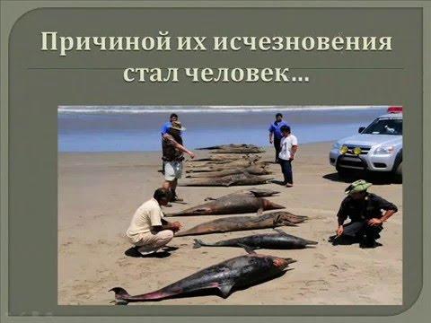 Исчезнувшие животные. Этих животных мы не увидим никогда! Берегите природу!!!