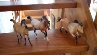 Random funny breyer horse video part 3