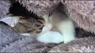 【のらとくーの可愛い寝姿】A cute sleeping figure between a cat and a dog