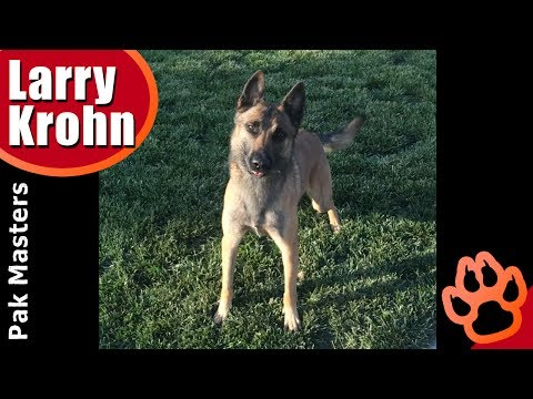Dog training positions for fetching a ball / sit down stand come reverse