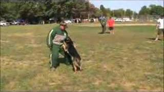 Dog Training- Police Dog Demonstration