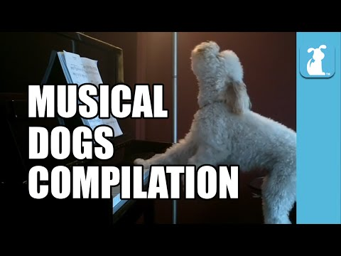 Musical Dogs Compilation (Funny Compilation!)