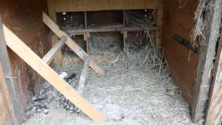How To Make A Chicken Coop Using Wooden Pallets