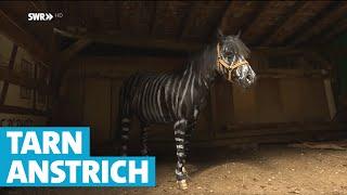 Tarnanstrich für Pferde
