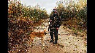 Охота на зайца с РГ Пылаем вл. Попов В.Б.