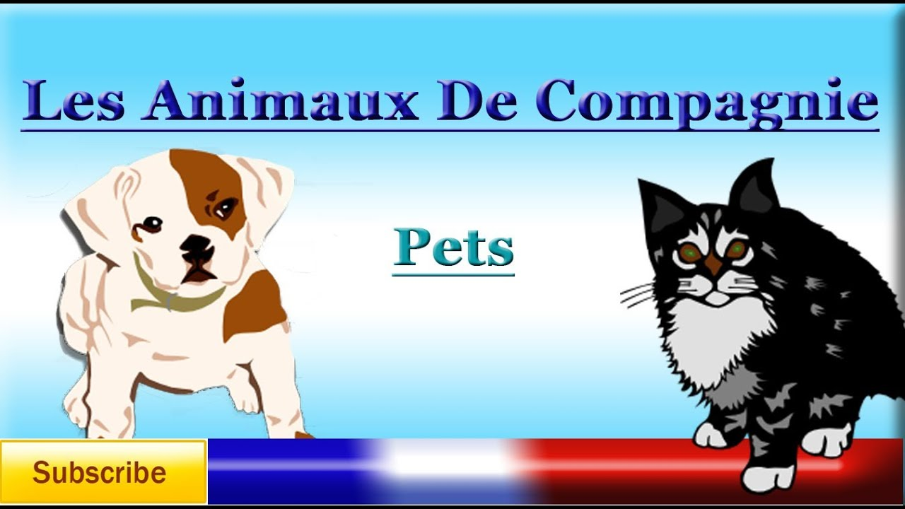 French Lesson 18 - Learn French Animal names - PETS