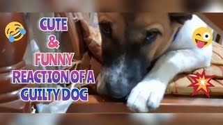 Guilty Dog Face Reaction | Guilty Dog's Reaction to His Own Video
