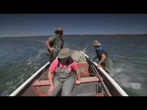 WA Crabs: Fishing Futures