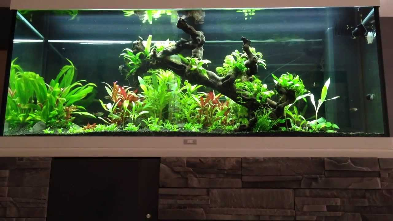 aquascaping aquarium juwel rio 240 plant youtube. Black Bedroom Furniture Sets. Home Design Ideas