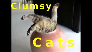 Cat Compilation - Funny clumsy Cats