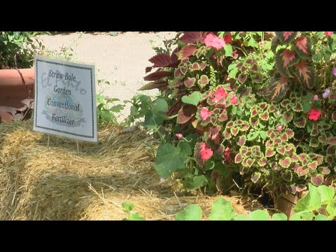 Well-known Albuquerque Restaurant Using New Technique To Grow Vegetables