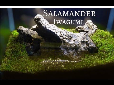 Tiger Salamander Tank: Iwagumi Style