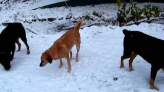 Dogs And Snow ~ Snowy Tuesday Part 2