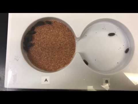 Pill Bug Experiment