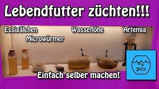 Aquarium Lebendfutter total einfach selber züchten! Essigälchen Mikrowürmer Wasserflöhe Artemia!