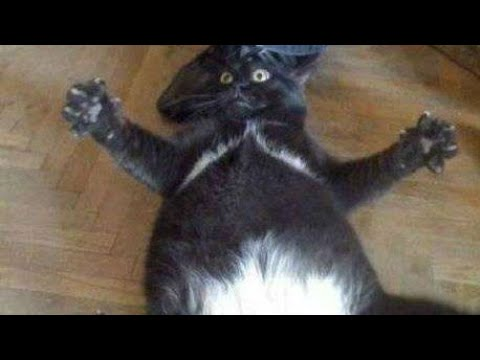 Funny CATS Will Make You LAUGH YOUR HEAD OFF - Funny Cats Compilation