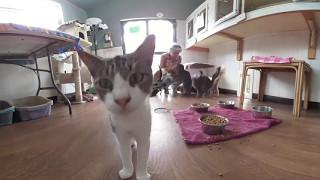 360 Degree Videotour - Domino's House Cat Rescue League