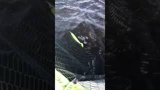 03 07 2021 Рыбалка на Рыбинском водохранилище Ловим щуку shorts