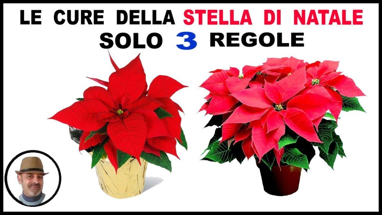 Foto Stella Di Natale.Le Cure Della Stella Di Natale Solo 3 Regole Youtube