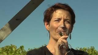 Dégustation de champagne dans une loge de vigne