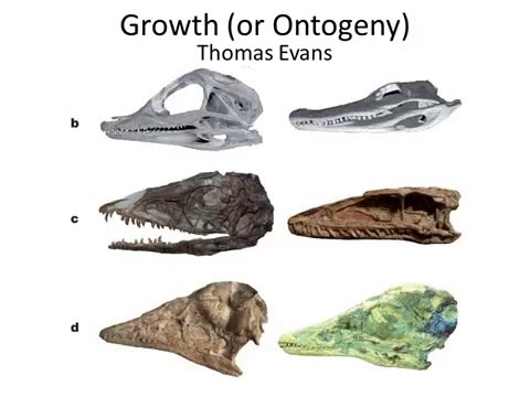 Growth of the Dinosaurs