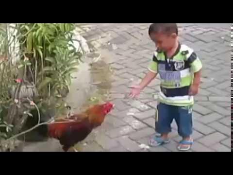 Anak Kecil Dikejar dan Dikroyok Ayam