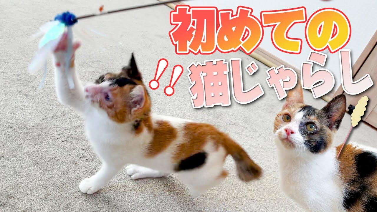 一度もおもちゃで遊んだことのなかった捨て猫が初めて猫じゃらしで遊んだ結果…
