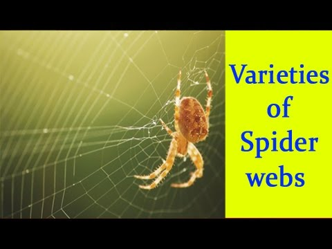 Varieties of Spiderwebs