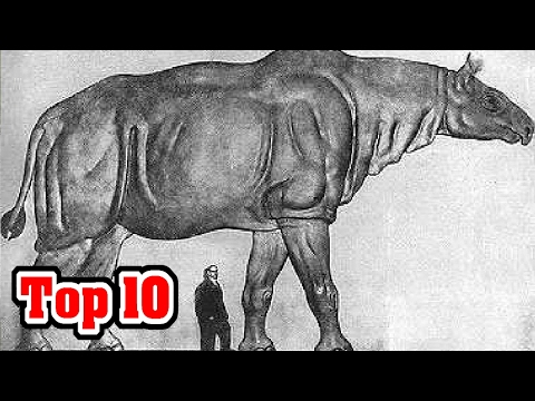 Top 10 Biggest Land Mammals That Ever Walked The Earth